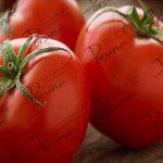 فروش گوجه